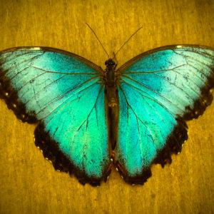 3727337-caterpillar-butterfly-transformation